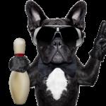hund-mit-pin